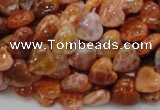 CAG628 15.5 inches 10*10mm heart natural fire agate beads wholesale