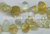 CCH312 15.5 inches 10*15mm citrine chips gemstone beads wholesale