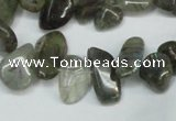 CCH320 15.5 inches 10*15mm labradorite chips gemstone beads wholesale