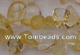 CCH612 15.5 inches 6*8mm - 10*14mm citrine chips gemstone beads
