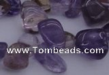 CCH614 15.5 inches 6*8mm - 10*14mm ametrine chips gemstone beads