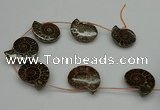 CMM05 15.5 inches 30*35mm - 35*40mm carved ammonite gemstone beads