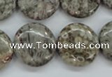 CSF01 15.5 inches 20mm flat round shell fossil jasper beads