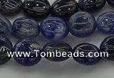 CSO670 15.5 inches 10mm flat round sodalite gemstone beads
